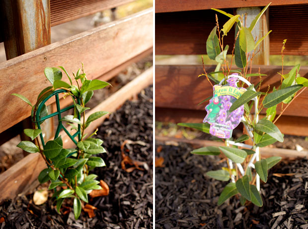Herb Happenings and Climbing Capers | She Sows Seeds