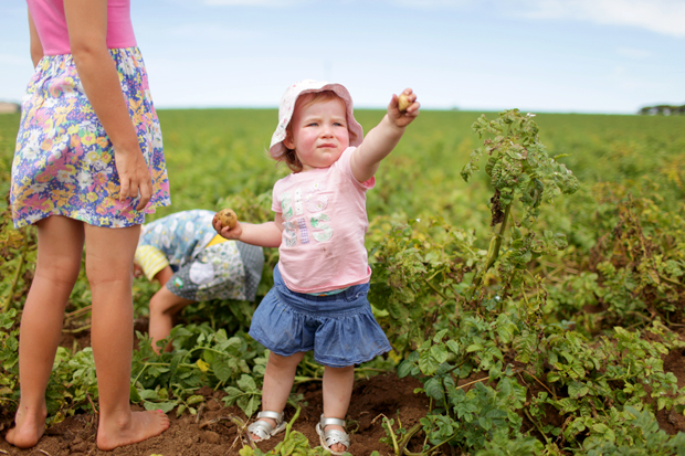 Pizzas and Trains and Spud Digging | She Sows Seeds 25