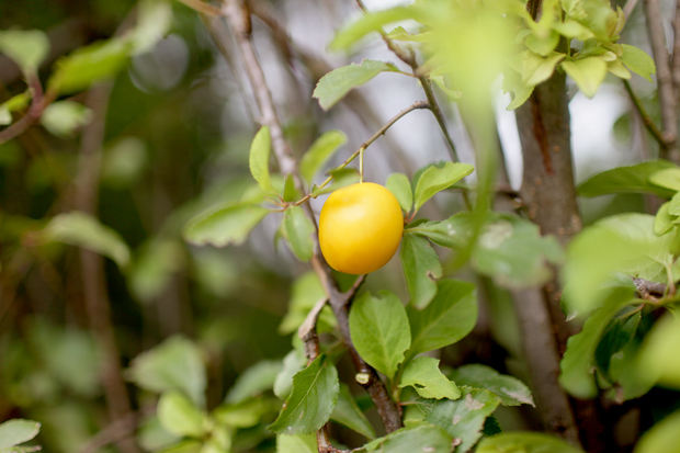 A Fruit Forage | She Sows Seeds 1