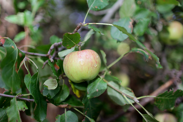 A Fruit Forage | She Sows Seeds 12