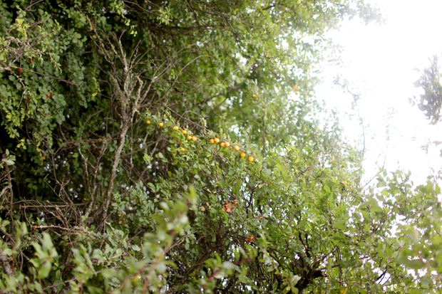 A Fruit Forage | She Sows Seeds 2