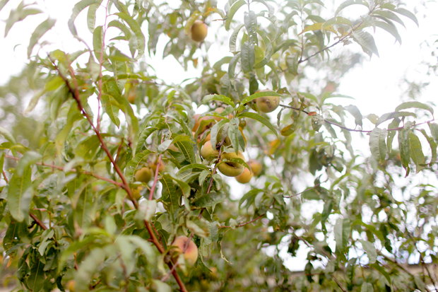 A Fruit Forage | She Sows Seeds 4