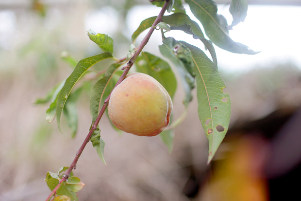 A Fruit Forage | She Sows Seeds 5