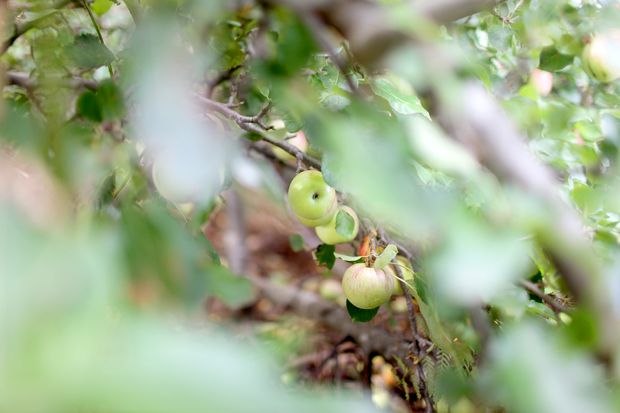 A Fruit Forage | She Sows Seeds 6