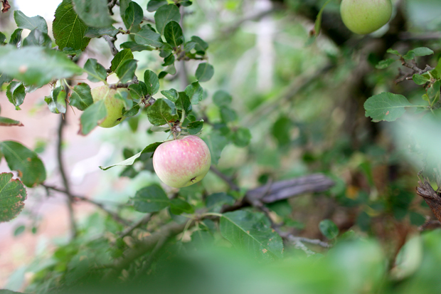 A Fruit Forage | She Sows Seeds 7