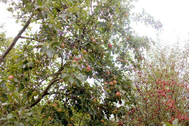 A Fruit Forage | She Sows Seeds 8