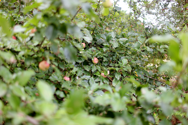 A Fruit Forage | She Sows Seeds 9