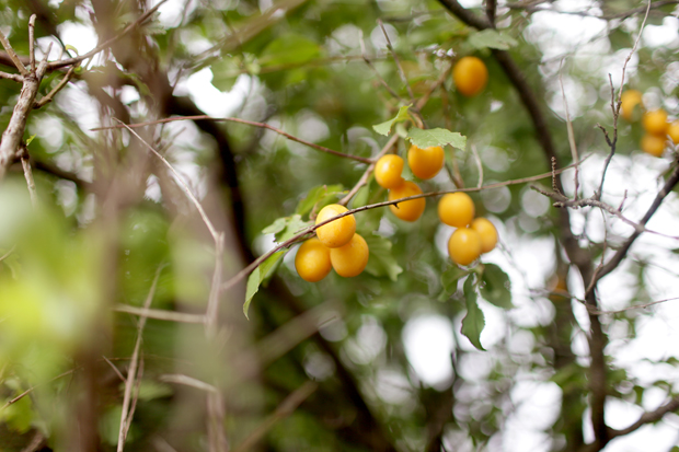 A Fruit Forage | She Sows Seeds