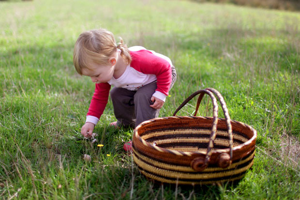 A Morning Mushrooming | She Sows Seeds 11