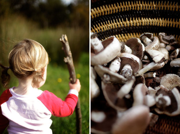 A Morning Mushrooming | She Sows Seeds