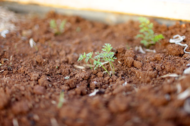 Positively Autumnal   She Sows Seeds 16
