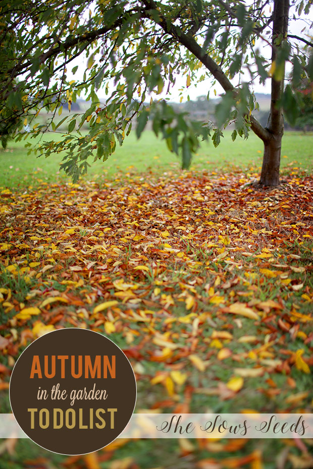 Autumn in the Garden | She Sows Seeds 7