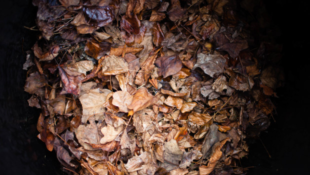 How To Start A Compost Heap (and fight the War on Waste)